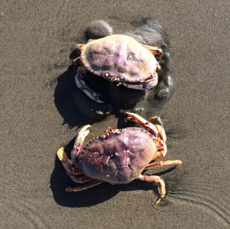two_crabs