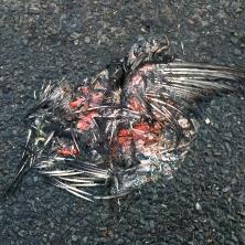 pigeon-one_5200389935_o