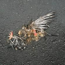 pigeon-three_5200997334_o